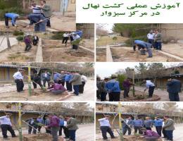 برگزاری کلاس آموزش درختکاری در مرکز آموزش فنی و حرفه ای سبزوار